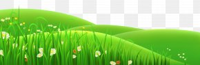 Transparent Flowers And Grass Clipart - Meadow Euclidean Vector Clip Art PNG