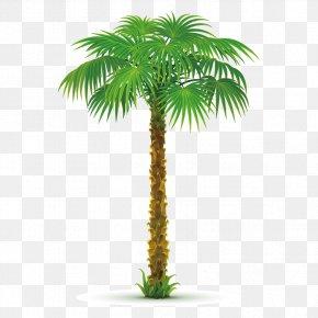 Creative Coconut Trees - Arecaceae Tree Areca Palm Clip Art PNG