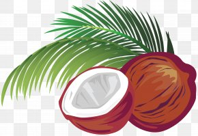Coconut - Coconut Milk Coconut Water Vector Graphics Illustration PNG