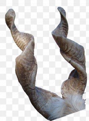 Goat - Girgentana Sign Of The Horns Antler PNG