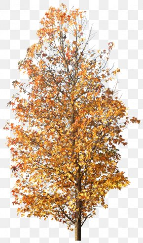 Tree - Twig Tree Autumn Clip Art PNG