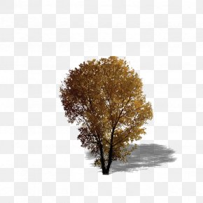 Plant,tree,forest,Leaves - Broad-leaved Tree Texture Mapping Evergreen PNG