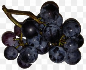 Grape - Zante Currant Grapevines Seedless Fruit Blueberry PNG