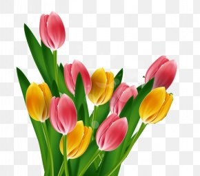 Fine Tulip Background Vector Material - Tulip Mothers Day PNG