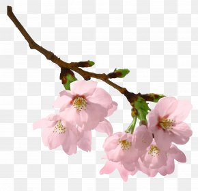 Spring Branch Picture - Branch Clip Art PNG