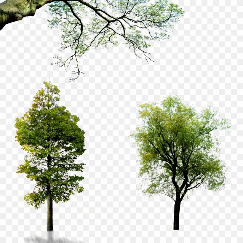 Wall Decal Download Wallpaper, PNG, 1748x1748px, Tree, Arecaceae, Branch, Full Hd, Grass Download Free
