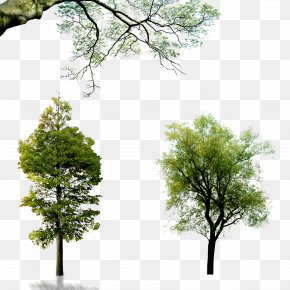 Trees - Wall Decal Download Wallpaper PNG