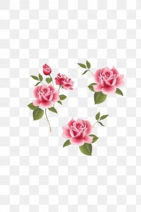 Rose,Pink Roses,Pink Flowers,flower - Garden Roses Beach Rose Pink Flower PNG