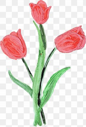 Lily Family Bud - Lily Flower Cartoon PNG