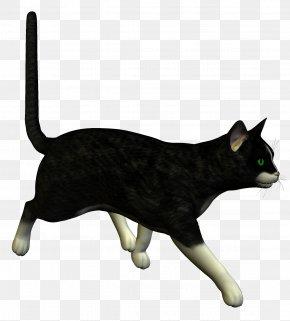 Black Cat - Feral Cat Kitten Le Chat Noir Black Cat PNG