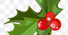 Mistletoe - Mistletoe Candy Cane Christmas Phoradendron Tomentosum Clip Art PNG