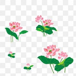 Hand-painted Lotus - Floral Design Nelumbo Nucifera Cut Flowers Clip Art PNG