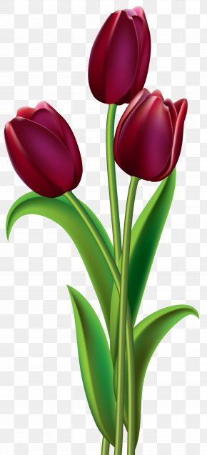 Red Dark Tulips Clipart Image - Tulip Red Flower Clip Art PNG