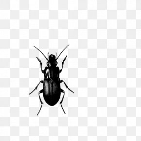 Insect - Insect Pest Control Cockroach PNG