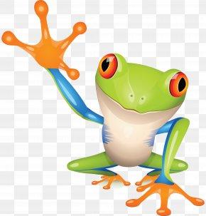 Frog - Australian Green Tree Frog Clip Art PNG