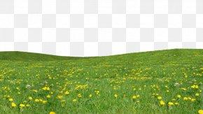 Grass Download - Garden Computer File PNG