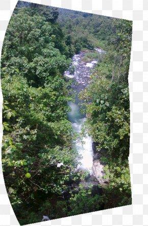 Walindi Plantation Resort - Water Resources Nature Reserve Biome Rainforest Vegetation PNG