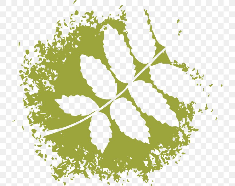 Leaf, PNG, 736x649px, Leaf, Flora, Flowering Plant, Grass, Green Download Free