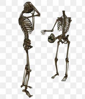 Skeleton - Skeleton Clip Art PNG