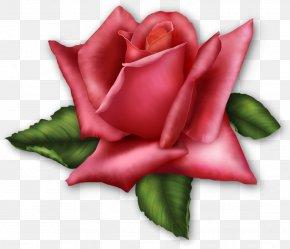 Large Transparent Rose Element - Rose Pink Clip Art PNG