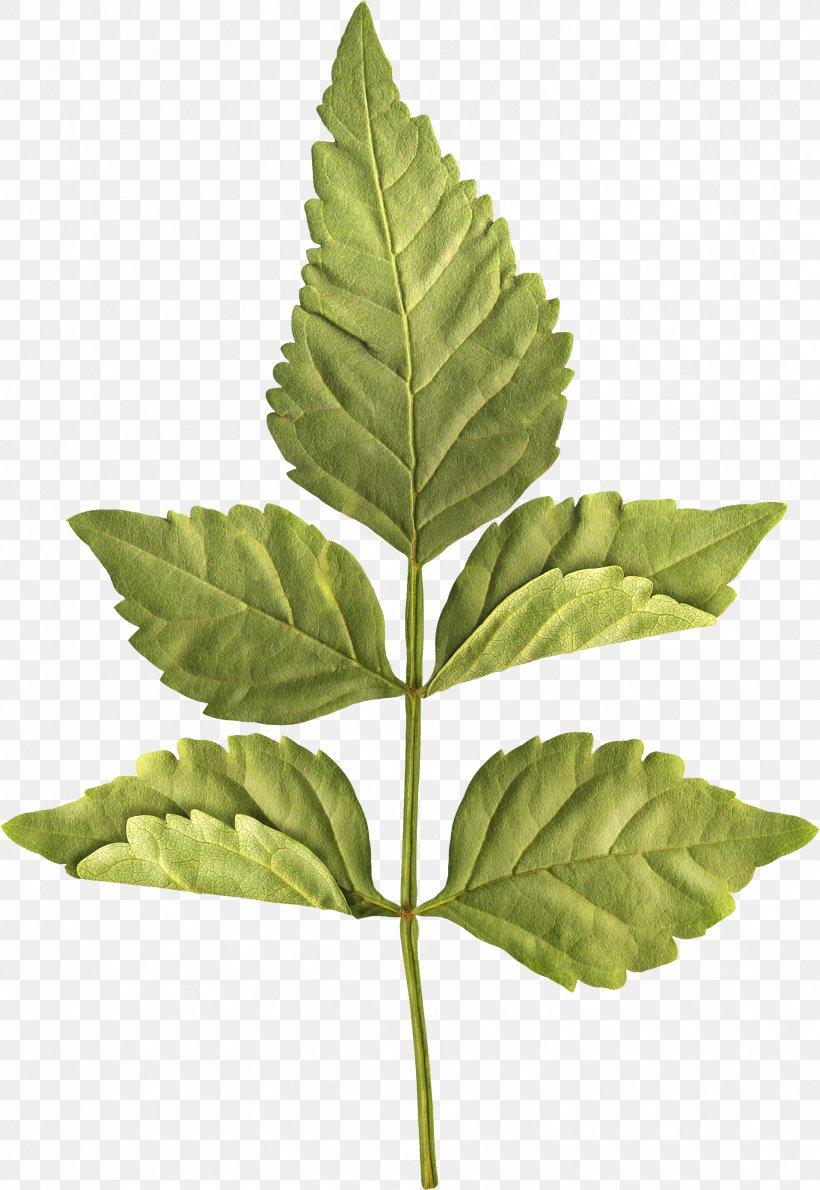 Leaf Centerblog Plant Stem, PNG, 1916x2781px, Leaf, Blog, Centerblog, Christmas, Flower Download Free