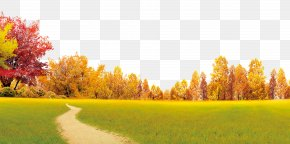 Autumn Scenery - Autumn Poster Yongdeng County PNG
