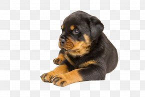 Black Pet Dog - Rottweiler Labrador Retriever Puppy Pet Dog Breed PNG