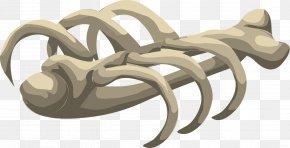 White Skeleton - Bone Human Skeleton Clip Art PNG