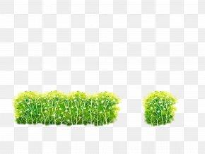Green Bushes Illustration - Shrub Download Illustration PNG