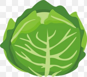 Vector Cartoon Cabbage - Chinese Cabbage Vegetable Cartoon PNG