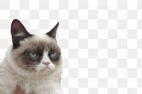 Post It - Grumpy Cat Cats And The Internet Kitten South By Southwest PNG