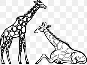 Giraffe Drawing Cliparts - Coloring Book Reticulated Giraffe Coloring Pictures Adult Child PNG