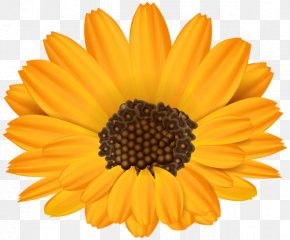 Flower - Common Sunflower Stock Photography Clip Art PNG