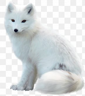 White Fox - Arctic Fox Polar Bear Alaskan Tundra Wolf PNG