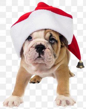 Dogs - French Bulldog Toy Bulldog Old English Bulldog Santa Claus PNG