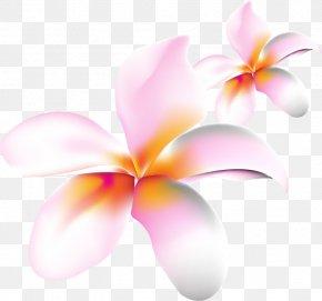Computer - Moth Orchids Desktop Wallpaper Pink M Close-up Computer PNG