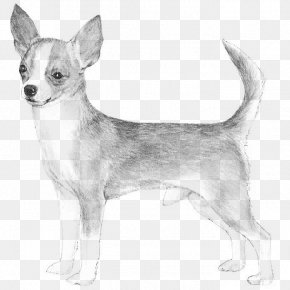 Chihuahua - Chihuahua Basset Hound Smooth Collie Rat Terrier Miniature Pinscher PNG