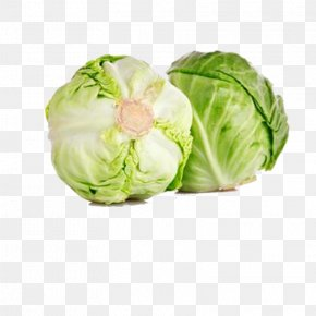 Green Cabbage - Red Cabbage Cauliflower Kohlrabi Brussels Sprout PNG