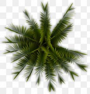 Palm Tree - Tree Arecaceae Plant Clip Art PNG