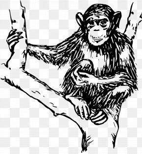 Chimpanzee - Chimpanzee Ape Gorilla Monkey Clip Art PNG