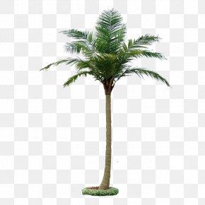 Coconut Tree - Coconut Tree Roystonea Regia Hyophorbe Lagenicaulis Taobao PNG