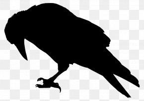 Bird - The Raven Bird Common Raven Crow Family Clip Art PNG