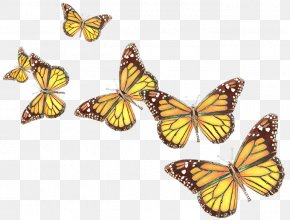 Pieridae Monarch Butterfly - Monarch Butterfly PNG