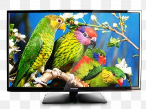 Watching Tv - Bird Parrot Owl Wild Animals Jigsaw Television PNG