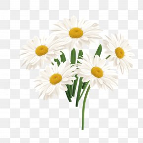 Vector White Sun Flower - Flower Common Daisy PNG