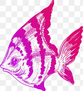 Color Painted Ocean Fish - Drawing Line Art Illustration PNG
