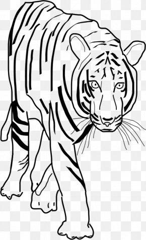 Tiger Stripes Clipart - White Tiger Black Tiger Clip Art PNG