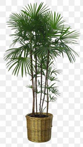 Bamboo Leaves Lush - Flowerpot Howea Forsteriana Houseplant Garden PNG