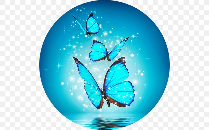 Butterfly Desktop Wallpaper High Definition Television