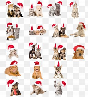Christmas Hats Pet Dogs And Cats - Dog Cat Pet Christmas PNG
